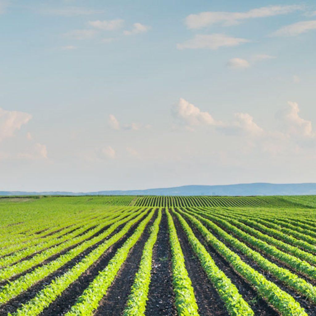 irrigazione a goccia Santena